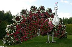 PEACOCK~Dubai Garden | Dubai Miracle Garden