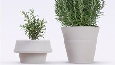 The Pizzolorusso & Click and Grow are interesting!  The 6 coolest planters we've ever seen via @PureWow