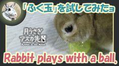 「ふく玉」を試してみたョ【ウサギのだいだい 】 2016年8月19日