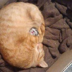 Amore di mamma, protezione assoluta!