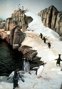 Biodome in Olympic Park. The best part is the penguins! Feeding time is 2:45pm.