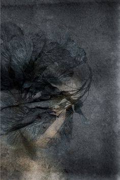 Vaikeneminen - Silence