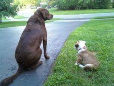 Watch puppy in training