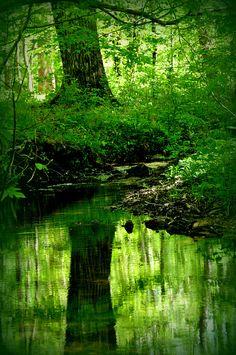 Creek at The Pocket