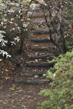 Steps for the trail