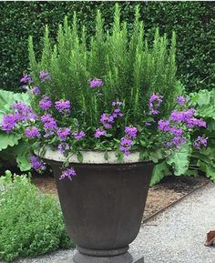 Spring Garden Pots and Planters Outdoor potted plants. Love this rosemary and verbenaOutdoor potted plants. Love this rosemary and verbena Container Flowers, Container Plants, Container Gardening, Gardening Tips, Organic Gardening, Hydroponic Gardening, Gardening Services, Gardening Websites, Plant Containers