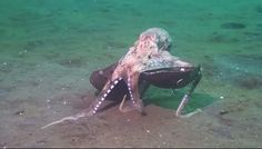 Octopus Brings Shelter On Road Trip
