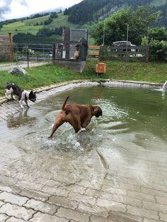 Agility Parcour, Dog Hotel, Vizsla, Happy Dogs, Pet Accessories, Far Away, Animals And Pets, Labrador Retriever, Places To Go