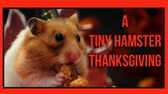 A tiny hamster and a small group of his furry friends sit down to enjoy a lavish miniature traditional Thanksgiving feast prepared by a very anxious Hello Denizen chef, who sighs with visible relie...