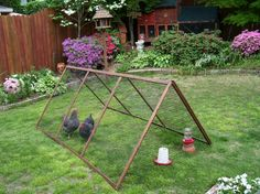 A collapsible chicken tractor.  Perfect to put my tiller chickens on my raised beds when fall comes.