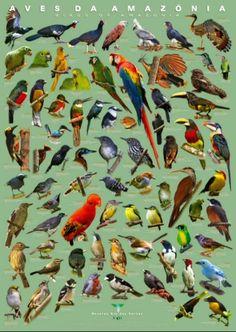 Aves do mundo