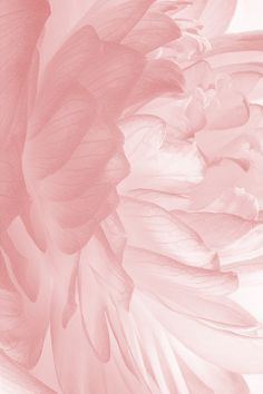 Pink wallpaper, screen wallpaper, iphone wallpaper, aesthetic wallpapers, e Wallpaper Free, New Wallpaper Iphone, Summer Wallpaper, Trendy Wallpaper, Cute Wallpapers, Iphone Wallpapers, Screen Wallpaper, Beautiful Wallpaper, Pink Flower Wallpaper