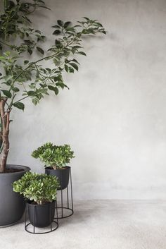 Indoor Garden Styling / urban jungle in amazing pots Plantas Indoor, Small Fountains, Decoration Plante, Deco Nature, Interior Plants, Botanical Interior, Tree Interior, Interior Garden, Green Plants