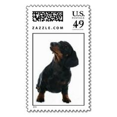 ==> consumer reviews          Black & Brown Dachshund Stamp           Black & Brown Dachshund Stamp We have the best promotion for you and if you are interested in the related item or need more information reviews from the x customer who are own of them before please follow the link to...Cleck Hot Deals >>> http://www.zazzle.com/black_brown_dachshund_stamp-172035456401796713?rf=238627982471231924&zbar=1&tc=terrest