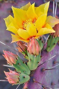 cereus cactus flower at night