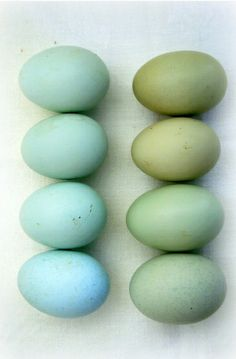 Dyed easter eggs in shades of blue and green. Colour Schemes, Color Combos, Color Patterns, Duck Egg Blue, Duck Eggs, Robin Egg Blue, Robins Egg Color, Color Stories, Color Pallets