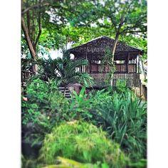 """""""Bahay Kubo, kahit munti / ang halaman doon ay sari sari / singkamas at talong / sigarilyas at mani / sitaw bataw pataniiiiii... (a native Filipino house)"""""""