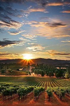 Napa Valley, California I used to live here in Morgan where Greg Kin band used to always play at a restaurant called Jack's Place and his wife was Filipina. It was fun. I had such a blast here in Napa Valley Napa Valley, Sonoma Valley, Napa Vineyards, Oh The Places You'll Go, Places To Travel, Places To Visit, Dream Vacations, Vacation Spots, Tuscany Italy