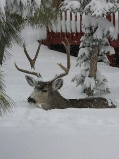 WoW ! Snow in Denver