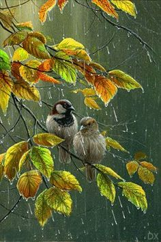 The perfect Birds Rain Art Animated GIF for your conversation. Discover and Share the best GIFs on Tenor. Pretty Birds, Beautiful Birds, Rain Gif, Wildlife Art, Morning Images, Morning Quotes, Bird Art, Rainy Days, Rainy Night
