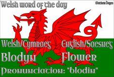 Welsh word of the day: Blodyn/Flower