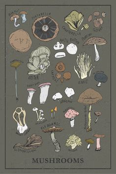 Mushroom Kitchen print / types / 12x18 poster / wall decor / home wall gallery