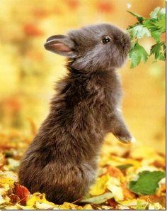 cute wild animals babies | 30 Lovely Photos of Wildlife Animals