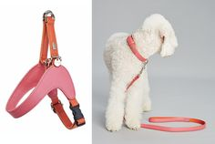 Dog lifestyle brand Hello Jello creates colorful collars, leads, and harnesses from premium Italian leather. Dog Lover Gifts, Dog Lovers, Dog Milk, Online Pet Store, Dog Boutique, Dog Collars & Leashes, Dog Items, Leather Collar, Collar And Leash