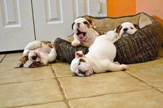 LOL.... some very tired dogs... hahahah...