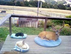 A deer who decided to come for a visit. | 41 Pictures You Need To See Before The Universe Ends