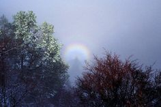 """""""Grand Canyon Glory"""" by Frank Zullo, Phoenix, AZ // A glory, the rainbow-colored ring around photographer's shadow, can be seen directly opposite the sun in foggy canyons, this one seen in the fog of a winter storm near Bright Angel Trailhead, South Rim, Grand Canyon National Park, Arizona. // Imagekind.com -- Buy stunning, museum-quality fine art prints, framed prints, and canvas prints directly from independent working artists and photographers."""