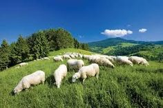 Image result for slovakia mountains