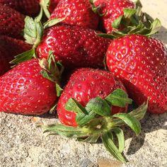 Now it's spring. #localfruit #spring #springtime #strawberries #fruit #food #foodporn #sun #red #igers #igersitalia #igersemiliaromagna #igersbologna