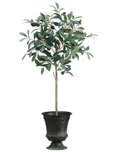 This faux is pre-potted in a tin urn and real look soil. This Olive Floor Foliage Tree in Tin Urn will grace any corner of your room beautifully. Olive trees are difficult to grow indoors, so why not give this low maintenance faux tree a try. Silk Plants, Fake Plants, Artificial Plants, Indoor Plants, Topiary Trees, Topiaries, Faux Olive Tree, Christmas Urns, Trees Online