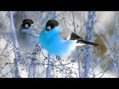 Vögel Singen und Zwitschern - YouTube