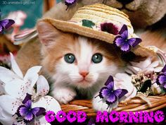 good+morning++animation+gif+butterfly+on+flower+Photos+Text+Messages+Facebook+Covers+3d+HD++Quotes+free+download+wallpaper+good+morning+ecards+graphics+images+gifs+facebook+Fb+Cover+3D++photo.gif (512×384)