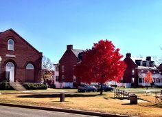 Fort McNair, el árbol rojo en otoño