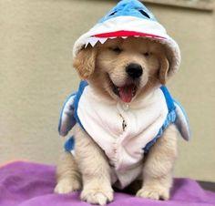 Super Cute Puppies, Cute Baby Dogs, Cute Little Puppies, Cute Funny Dogs, Cute Dogs And Puppies, Cute Little Animals, Cute Funny Animals, Pet Dogs, Doggies