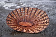 Limpet Coracle - Virginia King
