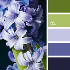Color Palette #3208
