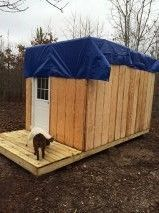 New Coop,Garden Tool Storage shed,Etc