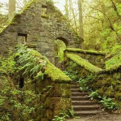 Stone House (aka Witches Castle) in the towering Douglas-firs in Forest Park, near downtown Portland Oregon. Covered in green lichen, moss, and ferns. An abandoned structure from the early-1900's.