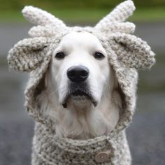 •••Because this time of year one reindeer just won't do•••❄️ Pictured is the Falyn Fawn...this is the crochet version of the Frye Fawn❄️ Crochet Dog Sweater, Crochet Wool, Crochet Hats, Knitting Patterns, Crochet Patterns, Knitting Ideas, Crochet Ideas, Velvet Acorn, Reindeer Hat