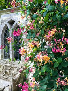 Honeysuckle wreaths the charming Gothic Cottage, Stourhead | thefrusteatedgardener