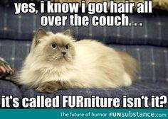 Hairy Furniture - FunSubstance.com