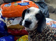 Campanha quer arrecadar uma tonelada de ração para animais que foram abandonados.
