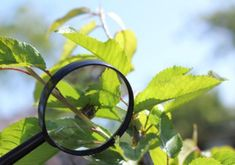 Ga met een wit doek onder een boom of struik staan en schudt ermee. Wat valt er uit?