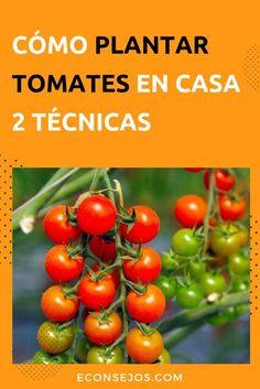 80 Ideas De Cultivar Vegetales En Casa Cultivo De Plantas Jardín De Vegetales Jardineria Y Plantas