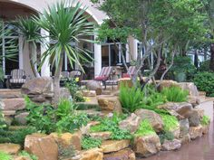 Rock garden wall by Waterfalls Fountains & Gardens Inc., tropical garden planting by Ultimate Landscape
