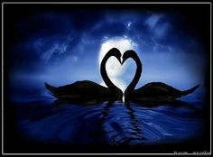 Love in the blue - water, clouds, sky, blue, mates, swans, heart shape